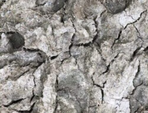 Irish Droughts: Environmental and Cultural Memories of a Neglected Hazard